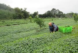 """Nông nghiệp hữu cơ không chỉ có """"sạch"""""""