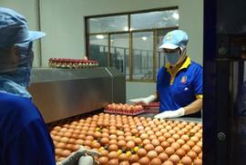 Giá trứng gà, vịt tăng kỷ lục