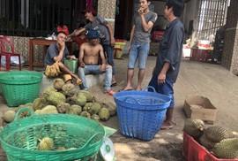 """Thực hư về """"sầu riêng ăn trả hạt"""" giá 15.000 đồng/kg"""