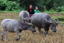 Du lịch ở Hà Giang có gì hấp dẫn?
