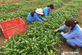 Nhật Bản sẵn sàng tiếp nhận thực tập sinh nông nghiệp Việt Nam
