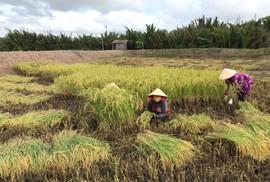 """Công ty nông sản hữu cơ vốn 0 đồng kêu gọi thành công 10 tỉ đồng: """"Chúng tôi cần người đồng hành"""""""