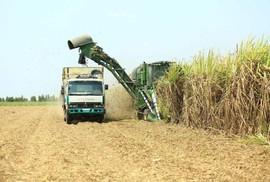 Ban lãnh đạo Công ty Thành Thành Công - Biên Hòa (SBT) liên tiếp mua số lượng lớn cổ phiếu