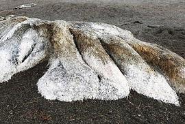 """""""Thủy quái"""" bí ẩn trôi dạt vào bờ biển Nga"""