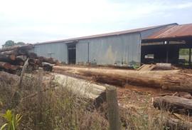 """Vụ Phượng """"râu"""": Gia đình Chi cục trưởng Kiểm lâm Đắk Lắk giao nộp 8 m3 gỗ"""