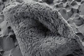 Tìm thấy hóa thạch cổ xưa nhất trái đất