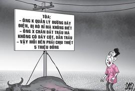 Vụ án con trâu cái ở Tây Ninh