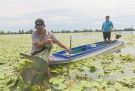 Khai thác nguồn lợi thủy sản mùa nước nổi mang tính tận diệt