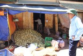 Loay hoay đối phó nông sản Trung Quốc