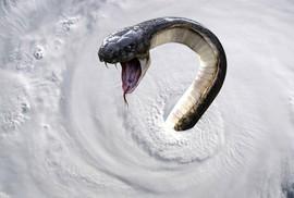"""Mỹ vừa hứng """"bão quái vật"""" Florence vừa lo rắn độc"""