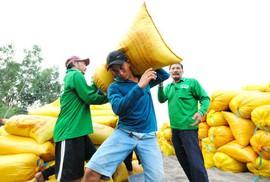 Gỡ khó cho xuất khẩu gạo