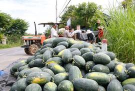 Trung Quốc kiểm soát gắt gao chất lượng dưa hấu Việt Nam khi nhập khẩu