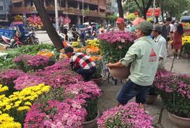 Hoa Tết bắt đầu giảm giá, xả hàng