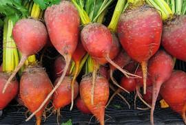 Thị trường thực phẩm hữu cơ Ý tăng trưởng ấn tượng