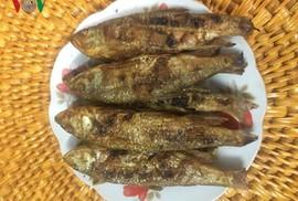 Độc đáo món cá suối Tấc Phù Yên, Sơn La