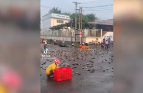 Xe tải lật, 3 tấn cá rô nằm kín mặt đường