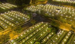Khung cảnh rực rỡ ở làng hoa chong đèn chuẩn bị vụ hoa Tết