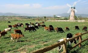 F&N Dairy lại đăng ký mua hơn 17,4 triệu cổ phiếu của Vinamilk