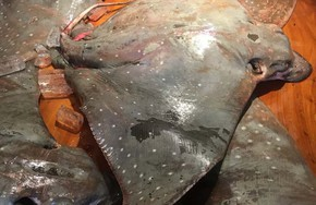 Ăn món cá 'không khoẻ' ở TP HCM