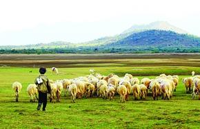 Có một đồng cừu còn đẹp hơn cả… MV của Đen Vâu