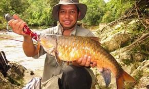 Quý như vàng, đặc sản cá