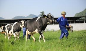 """Vị thế của """"ông lớn"""" ngành sữa Việt"""