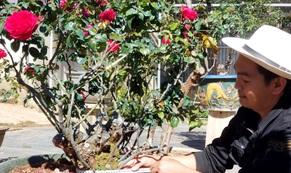 Độc đáo gốc hồng Pháp 70 tuổi đẹp hiếm gặp ở Đà Lạt