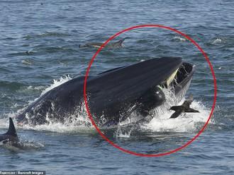Mỹ: 30 giây kinh hoàng của ngư dân rơi vào miệng cá voi - Báo Người lao động
