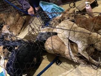 """Bà trùm"""" xinh đẹp của đường dây trộm chó lãnh 30 tháng tù giam - Báo Người  lao động"""