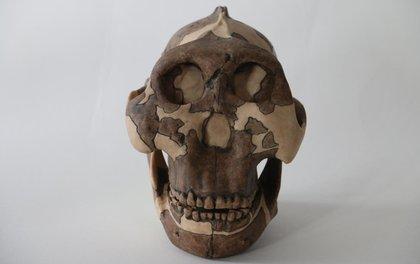 Khổ vì bệnh tình dục từ… 3 triệu năm trước