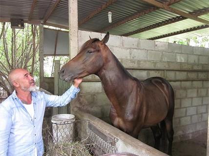 Giữ lửa nghề nuôi ngựa đua