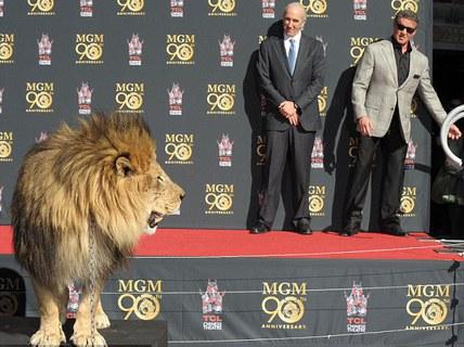 """Sao phim """"Rambo"""" mất hết khí thế vì... sư tử"""