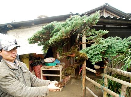 Lập chốt chặn, chống trộm tùng lùn Phan Xi Păng chơi Tết
