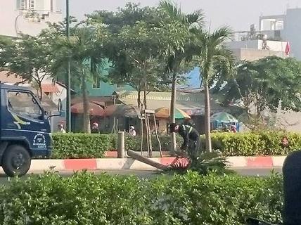 """Vụ """"hạ sát"""" cau đường Phạm Văn Đồng: Có bỏ tiền ra đâu mà xót?"""