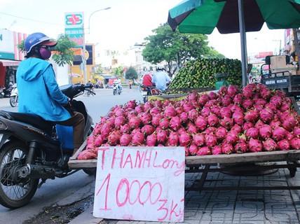 Thanh long bán lề đường Sài Gòn có giá 200 đồng/kg tại vườn