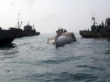Tàu cá Trung Quốc lật ngoài khơi Hàn Quốc