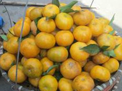 12 loại quả Trung Quốc hay bị đánh lừa là hàng Việt