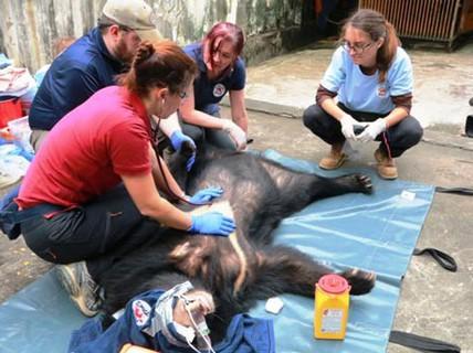 Cứu hộ 3 con gấu ngựa nuôi nhốt trong nhà dân