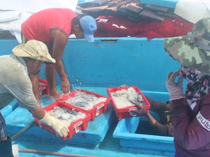 Trúng đậm cá ngừ sọc dưa, ngư dân thu tiền tỉ