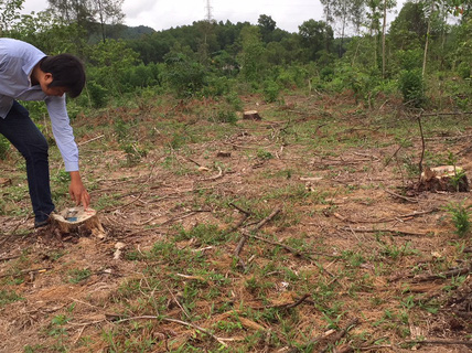 Rừng thông đặc dụng ở thành phố bị biến mất giữa ban ngày