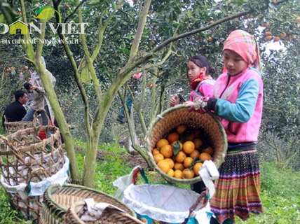 Hoa mắt với phụ nữ Mông ở Hà Giang