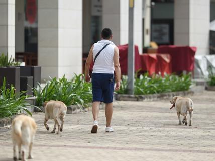 Quản lý chó nuôi: Vẫn khó?