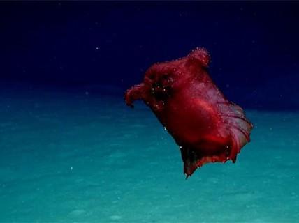 """Lần đầu tiên phát hiện """"quái vật gà không đầu"""" ở Nam Cực"""