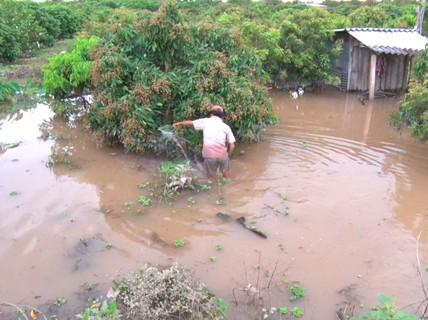 Vỡ đê vì đặt cống ẩu, cuộc sống người dân cù lao bị đảo lộn