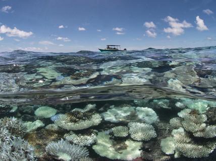 Đại dương nóng bất thường đe dọa trái đất