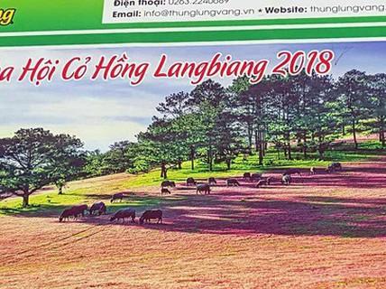 """""""Xài chùa"""" hình ảnh cỏ hồng: Ban tổ chức xin lỗi vì thiếu... kinh nghiệm"""