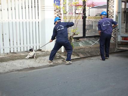 """Biệt đội """"săn"""" chó thả rông ở Sài thành"""
