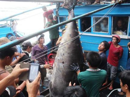 Ra Hoàng Sa câu cá ngừ vây xanh kỷ lục