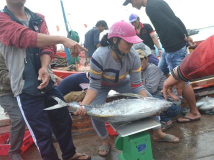 Bội thu mùa cá cuối năm tại ngư trường Hoàng Sa
