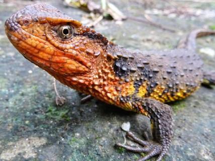 Mekong - Thánh địa của những sinh vật chưa từng thấy trên trái đất